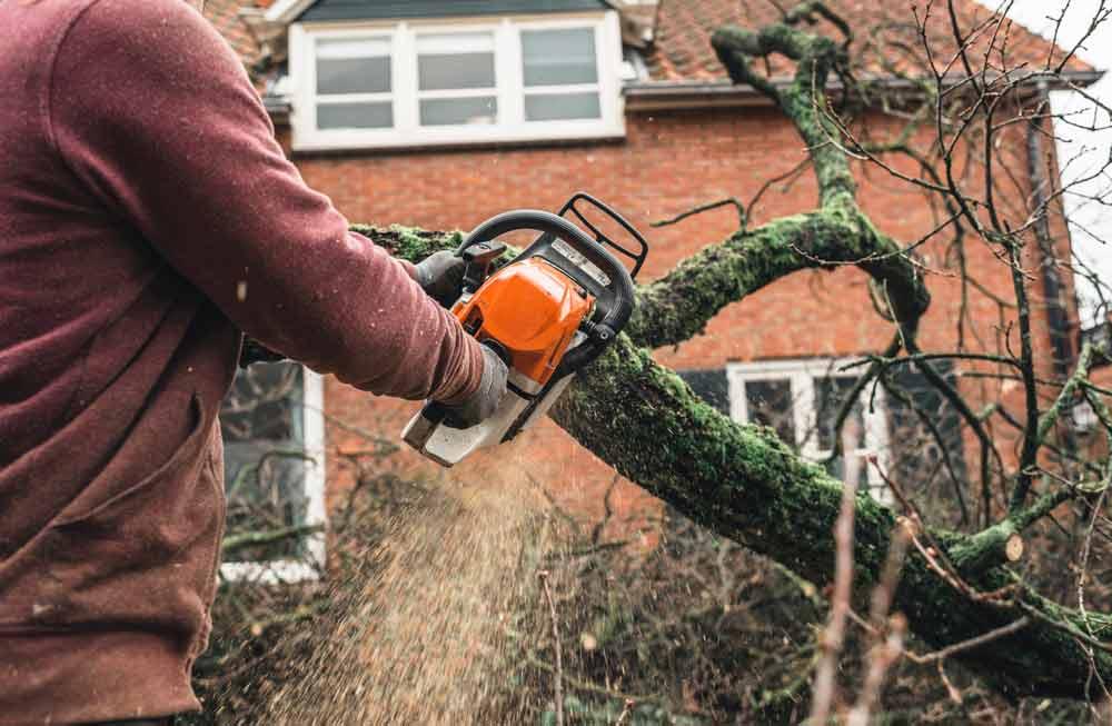 tree grinding Lancaster PA
