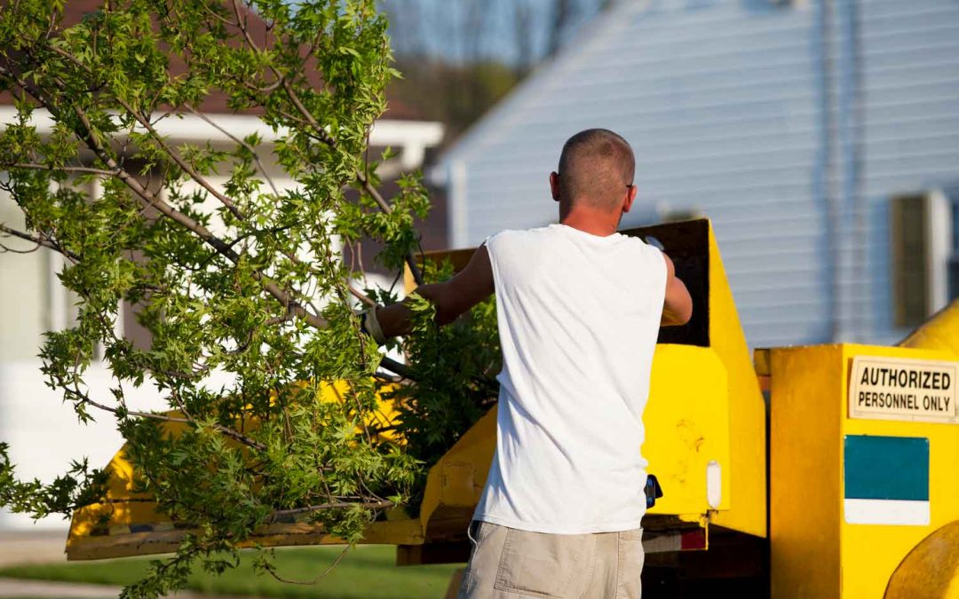 The Ultimate Tree Service Guide