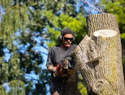 Lancaster PA tree service