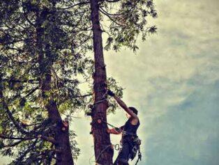 Tree service Lancaster PA